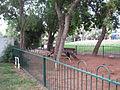GanHaBanim036.jpg