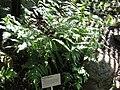 Gardenology.org-IMG 0830 rbgs10dec.jpg