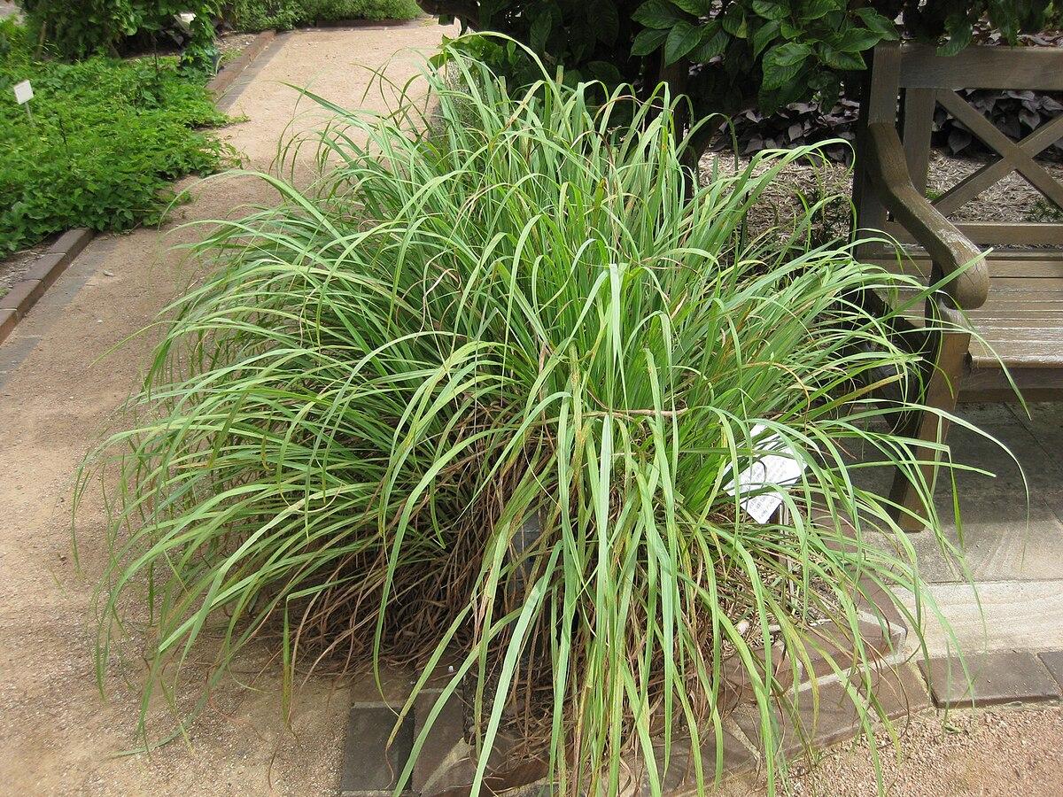 Gardenology.org-IMG 2892 rbgs11jan.jpg