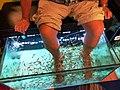 Garra rufa pedicure Patong Thajsko 2018 1.jpg