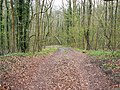 Gatcombe Wood, Gloucestershire - geograph.org.uk - 773995.jpg