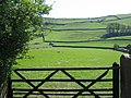 Gate and Sheep Pasture, Settle - geograph.org.uk - 438046.jpg