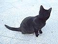 Gato callejero en Madrid 08.jpg
