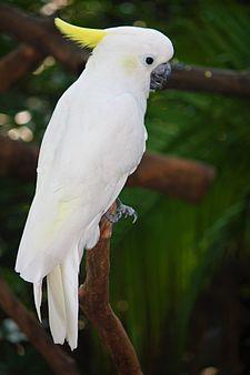 8400 Gambar Binatang Burung Kecil HD