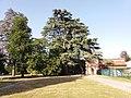 Genay - Rhône-Alpes - Parc de Rancé - Cèdre de l'Atlas bleu.jpg