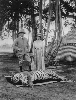 Tiger hunting capture and killing of tigers
