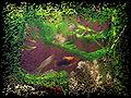 Gimpressionist 51 aquarium 0741 1 nevit.jpg