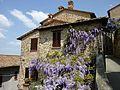 Glycinie Italien.jpg