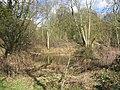 Glyn Davies Wood - geograph.org.uk - 148183.jpg