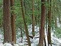 Golden Eagle Trail (Full Hike) (17) (11141985734).jpg