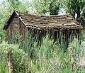 Gone to Weeds, Sierra Nevada, CA 6-16 (In Explore) (27388211203).jpg