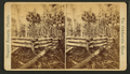 Goodrow's Clearing, from Robert N. Dennis collection of stereoscopic views.png