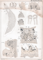 Goto 1894 - Studies on the Ectoparasitic Trematodes of Japan - Plate 3.png