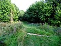 Grassy Track - geograph.org.uk - 238781.jpg