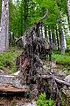 Großen Schachtenwanderung ab Buchenau im Nationalpark Bayerischer Wald 02.JPG