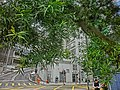 HK 上環 Sheung Wan 般咸道休憩花園 Bonham Road Rest Garden green leaves view Breezy Path Feb-2014 Bonham Court.JPG