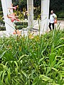 HK 中環 Central 金鐘 Admiralty 香港公園 Hong Kong Park flora green leaves May 2020 SS2 07.jpg