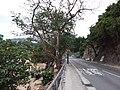 HK 南區 Southern District 深水灣 Deep Water Bay 香島道 Road January 2019 SSG.jpg