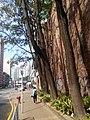 HK 荃灣 Tsuen Wan 美港貨倉 MayKong Godown 青山公路 Casrtle Peak Road trees Jan 2017 Lnv2.jpg