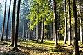 Hajnówka, Poland - panoramio (188).jpg