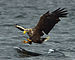 Hawks, Eagles, Kites, and Allies - Photo (c) Jacob Spinks, some rights reserved (CC BY)