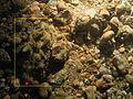 Halichondriidae WBRF CEND0313 HP24 STN 223 A1 012.jpg