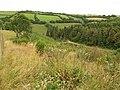 Hall Wood - geograph.org.uk - 886976.jpg
