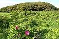 Halligarth plantation, Baltasound - geograph.org.uk - 954123.jpg