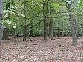Hambach forest 02.jpg