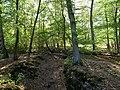 Hambach forest 31.jpg