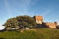 Hammershus - tree.jpg