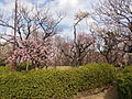 Hanegikouen-Umebayashi.jpg