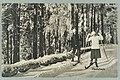 Harjutie, Tarkemmin määrittelemätön paikka, 1910s–1920s PK0129.jpg