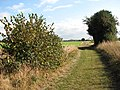 Hazelnut and holly - geograph.org.uk - 1536834.jpg