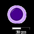 Hemocytoblast.png