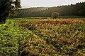 Herbst im Ranntal 2 - panoramio.jpg