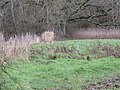 Heron in field near Selham Bridge - geograph.org.uk - 1637630.jpg
