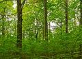Herrnhut Naturschutzgebiet Hengstberg 04.jpg