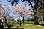 High Park, Toronto DSC 0164 (17367858956).jpg
