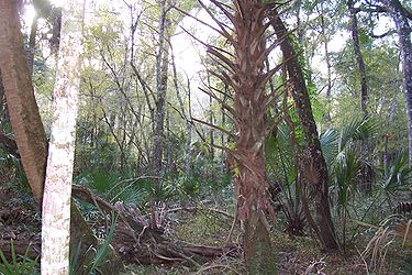 Hillsborough River State Park 8.jpg