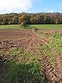 Hillside Farmland near Little Purlieu Wood - geograph.org.uk - 603736.jpg
