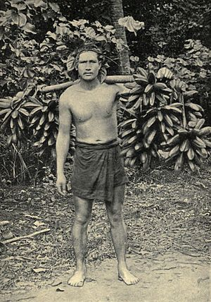 "Fe'i banana - Pre-1906 photograph titled ""Hillsman carrying feis to Papeete"" (Tahiti)"