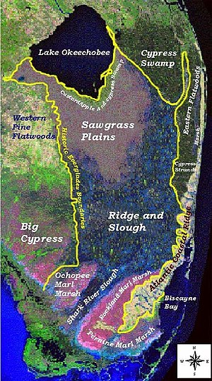 Geography and ecology of the Everglades - Major landscape types in the Everglades before human action. Source: U.S. Geological Survey