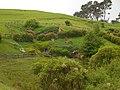 Hobbiton, The Shires, Middle Earth, Matamata, North Island, New Zealand - panoramio (2).jpg