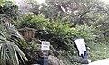 Hoi Sham Rock and Fishtail Rock 10.jpg