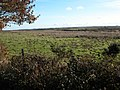 Hollocombe Moor - geograph.org.uk - 282254.jpg