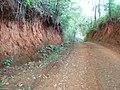 Horizonte A sobre horizonte B em LATOSSOLO de cerradão com raízes expostas. Município de Arapuá MG - panoramio.jpg