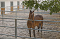 Horse-Paddock.jpg