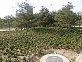 Huangdao, Qingdao, Shandong, China - panoramio (219).jpg