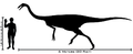Human-gallimimus size comparison.png